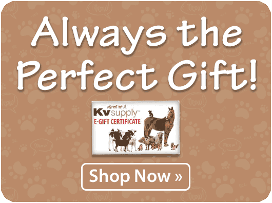 Always the Perfect Gift!